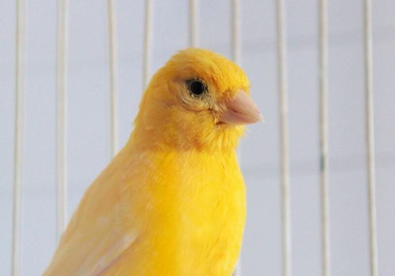 Tips para alimentar bien a nuestros pájaros