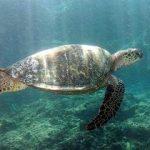 Fotos de tortugas