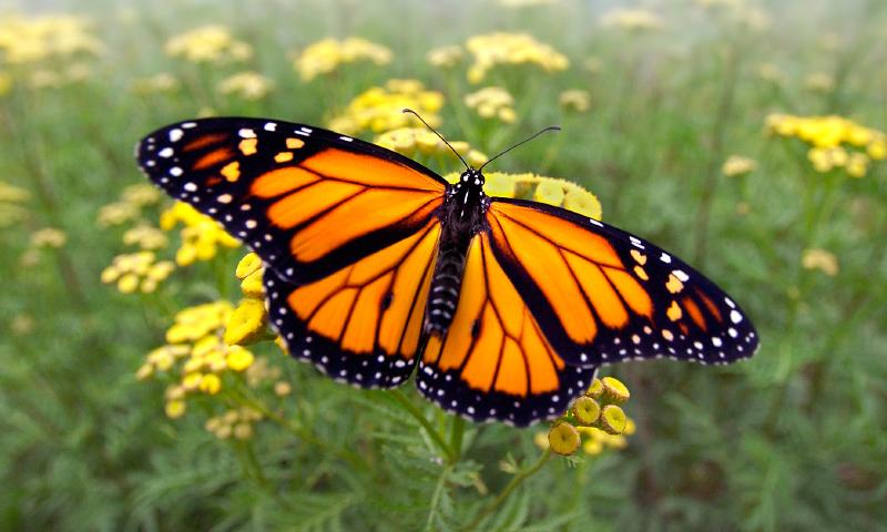 Vida de las mariposas