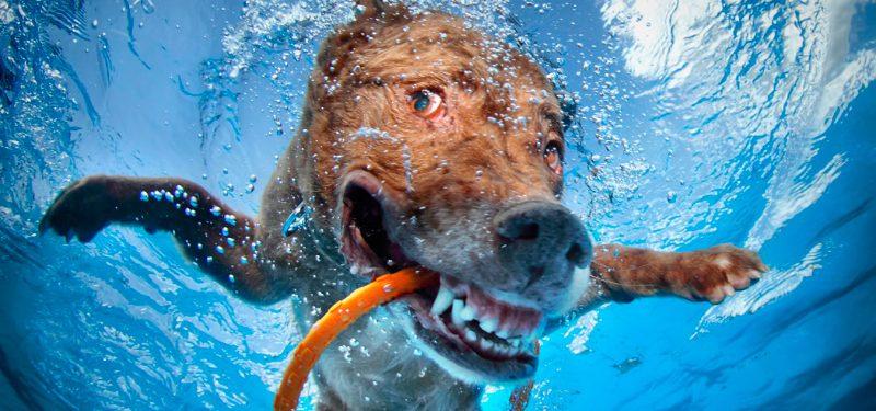 Vídeos de perros